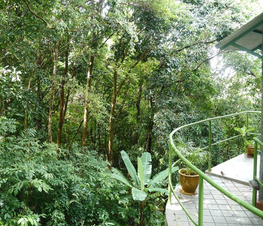 Ambong Ambong Rainforest Retreat